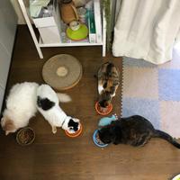 ごはん!ごはん! - ぶつぶつ独り言2(うちの猫ら2018)