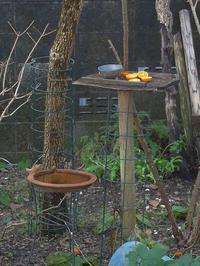 野鳥とガーデン - HANA 花♪菜園日記