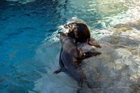 キュウタロウ - 動物園へ行こう