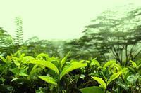 たまには紅茶の話を~アールグレイについて~ - Serendipi''tea''  セレンディブログ