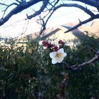 梅一輪 一輪ほどの暖かさ - 暮らしのエッセンス   北鎌倉の山の家から