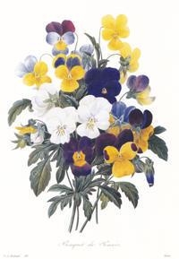 ひろしま美術館、ルドゥーテの「美花選」展より、《パンジーのブーケ》(1) - ルドゥーテのバラの庭のブログ