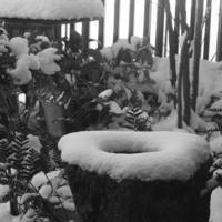 雪でした - なんとなくデジタル