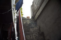 Our dog, Momo, in Upper Bicutan - SONGS