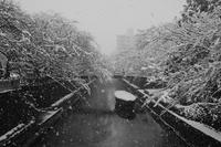 我が街スナップ(雪の日編*) - 父ちゃん坊やの普通の写真その2