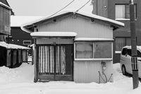 Snowy - SCENE
