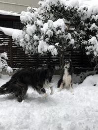 It's snowing !! - へごきゃらにゃっぺ