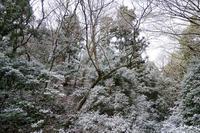 雪景色 - 寄り道、細道、バイク道