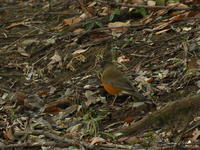 証拠写真集 - TACOSの野鳥日記