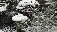 雪と椿と - ポーセリンペインティング☆ブログ