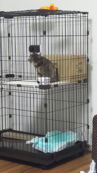 むうの鳴き声 - 猫に目薬