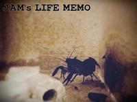 子持ちザリガニ - LIFE MEMO