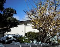 路傍の花、樹々の鳥(141)~雪臘梅青空~ - 大屋地爵士のJAZZYな生活