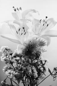モノ花 - 僕の足跡