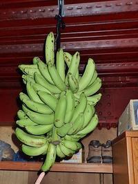 島バナナが届きました! - 浦佐地域づくり協議会のブログ