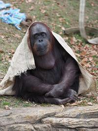1月17日(火)座右の銘 - ほのぼの動物写真日記