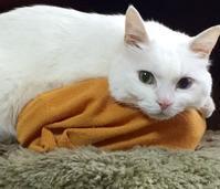 猫の必需品(くらし部門) - 赤煉瓦洋館の雅茶子