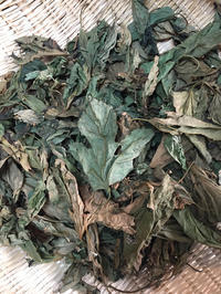 ハーブボール桑の葉 - natural essence : EKO PROJECT