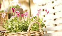温室の花 - お茶にしませんか