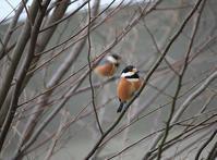 今日の鳥さん170116 - 万願寺通信