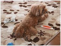 久々のホットカーペットは、2わんずのお腹もぽかぽかにしてくれたみたい\(>3(O^-)/ウフ☆ - さくらおばちゃんの趣味悠遊