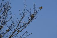 公園の鳥 - Mag's  DiaryⅡ