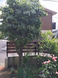 2014年の記録 その8 ハナミズキを伐採、庭を拡張する - my small garden~sugar plum~
