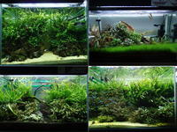 【LED照明検討中の方】水草用LED、4機種の明るさを比較【参考までに】 - 癒しのアクアライフ