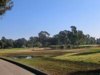新春初ゴルフ1月15日 - 猫のいる風景