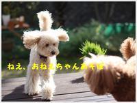 寒いこの季節、さくらと大が走り回れる庭があって良かったと思う、ぐうたら飼い主です(´A`。)グスン - さくらおばちゃんの趣味悠遊