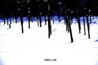 冬の青い池(写真部門) - 風道