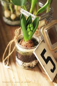土付き芽だし球根で「ヒヤシンス」水栽培の作り方♪ - a piece of dream* 植物とDIYと。