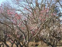 <白梅>も綺麗に咲いていた - 【出逢いの花々】