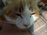君のニャは(自由部門) - COMPLEX CAT
