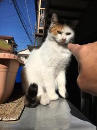 良い天気だ! - ぶつぶつ独り言2(うちの猫ら2018)