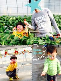 イチゴ かわいや、かわいや イチゴ。 - ayumidori GO!!GO!! +PON!!