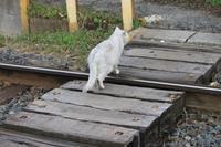 踏切を渡るネコ~♪ - もりじいの備忘録。