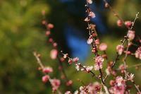 武蔵野公園から野川へ - 柳に雪折れなし!Ⅱ
