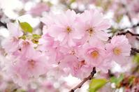 【利便性抜群】ライブラヒルトンプラザ大阪に行こう! - ライブラナチュテラピーの aroma な話