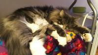 圧力鍋の悲劇 - 猫に目薬