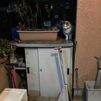 家に帰ったら - ぶつぶつ独り言2(うちの猫ら2018)