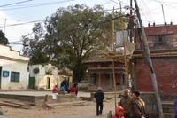ネパールの村の広場 - アーバン・ガーデン・ウォッチング
