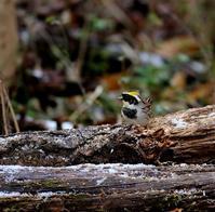 雪が降った後だったが・・・ - 一期一会の野鳥たち