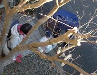 それぞれの日々 - hibariの巣