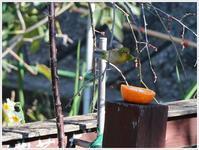 庭に来る鳥たちに、おやつですよ~ - さくらおばちゃんの趣味悠遊