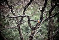 春まだ遠し - Photographs