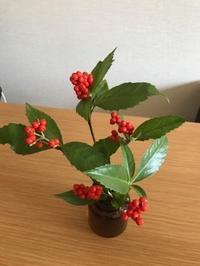 季節の花をみんなに - 塾長の嫁日記~こども体感学習塾humming bird~