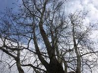 冬木立 - 花の自由旋律