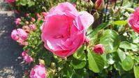花粉症予防のためのアロマスプレー作り - ~しなやかに心地よく~あづみのリラックスサロンharum