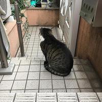 おーい! - ぶつぶつ独り言2(うちの猫ら2018)